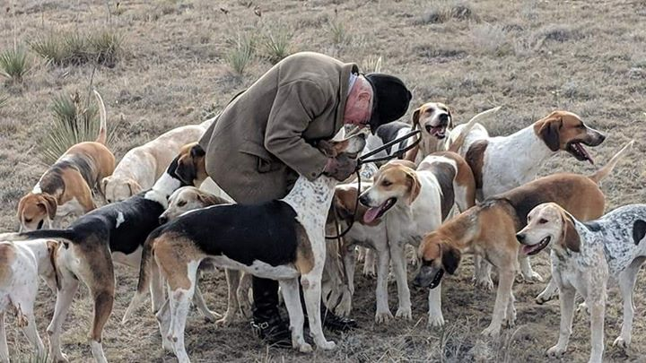 Thanks to Cary Meyer of the Arapahoe Hunt (CO) for sharing this image of Dr. Marvin Beeman, MFH, praising hounds following a recent meet. Longtime huntsman Dr. Beeman handed the horn over to Stephen Currey this season, but hunted hounds this day as Currey was away.